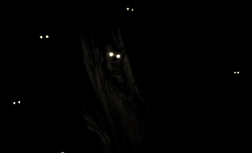 Night-Eyes-Bush-Baby-1024x682