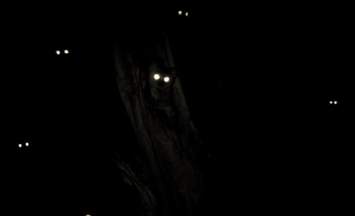 Night-Eyes-Bush-Baby-1024x682
